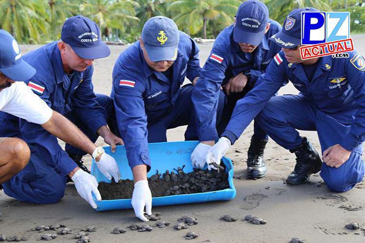 """Evitan que 7.800 huevos de tortuga terminen como """"bocas"""" en cantinas de Parrita"""