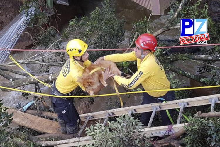 SENASA fortalece atención veterinaria y alimenticia de animales afectados por tormenta tropical Nate.