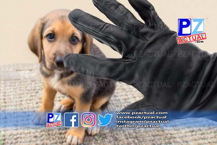 ¡Alerta! Delincuentes se hacen pasar por funcionarios de SENASA para robar mascotas.