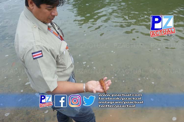 Río Barú, Guabo, www.pzactual.com